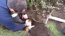 Hasiči z Přelouče v úterý 19. října vyprošťovali zaseknutou kočku. Z trubky vycházelo jen zoufalé mňoukání.