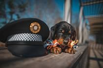 Pardubičtí strážníci mají nového parťáka - je jím štěně Sonny.