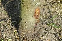 Sousedskou nenávist odnesly také stromy.