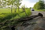 Spadlé stromy na Pardubicku zaměstnávaly hasiče až do rána.