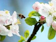 VÝSTAVA K VÝROČÍ.  V budově Českého svazu chovatelů uspořádali milevští včelaři jubilejní výstavu. Na snímku předseda základní organizace Richard Šimko (vlevo) a Pavel Sláma.