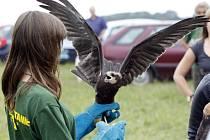 Záchranná stanice Pasíčka navrátila pod Kunětickou horou do volné přírody celkem třináct ptáků.