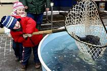 Ryby se šupinami i bez nich, malé i velké, ty všechny zatím zpříjemňují vycházku po městě hlavně malým dětem.