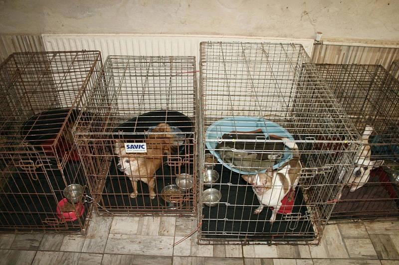 Ze zásahu policie v množírně psů (26.10.)