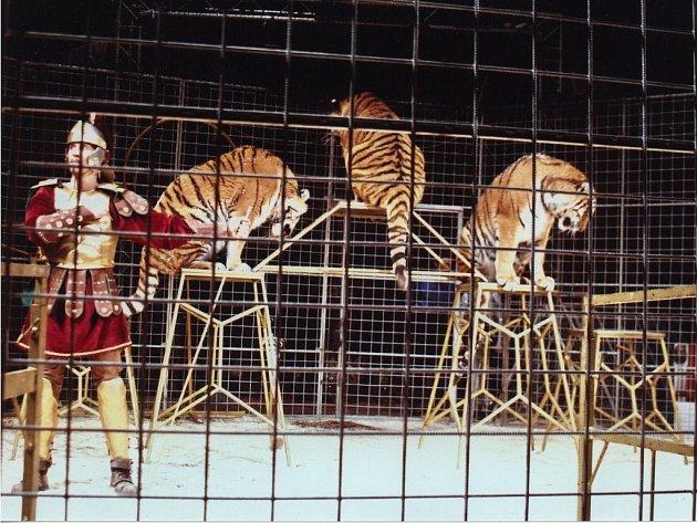 Drezůra tygrů