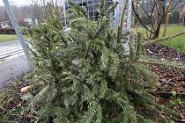 Většina domácností vánoční stromek odstrojí po 6. lednu.