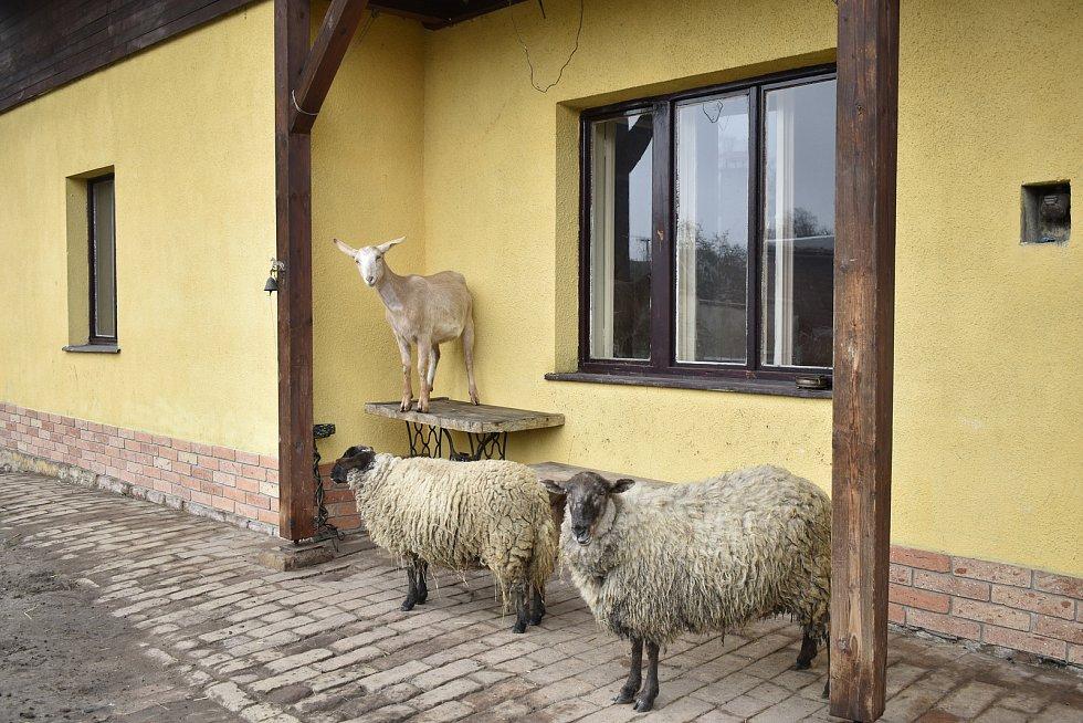 Lidé z nadačního fondu Pardubice sobě provozují u Sezemic farmu, kde se starají o zachráněná zvířata.