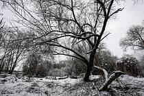 Zima v pardubické džungli v okolí řeky Chrudimky zvaná Červeňák.