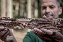 Sucho a kůrovec. Tato dvojice nyní ohrožuje české lesy.