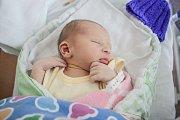 David Dvořák se narodil 3. srpna minutu před polednem. Měřil 46 centimetrů a vážil 2,8 kilogramu. Maminku Kateřinu u porodu podpořil tatínek Karel. Rodina žije v Pardubicích.