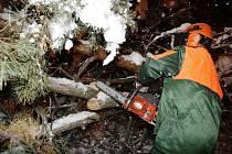 Skupina krizového řešení pardubické městské policie vyrazila do terénu ještě v neděli v noci. Strážníci odstraňovali popadané stromy v ulicích Pardubic.