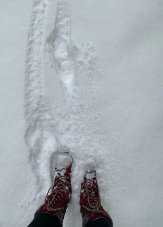 Sníh v Cholticích na Pardubicku.