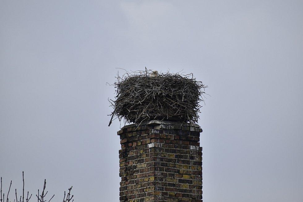 Čapí hnízdo v Chotči.