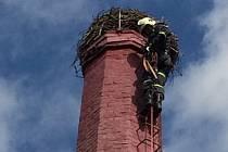 Kontrolu čapího hnízda provedli hasiči se strážníky pomocí žebříku