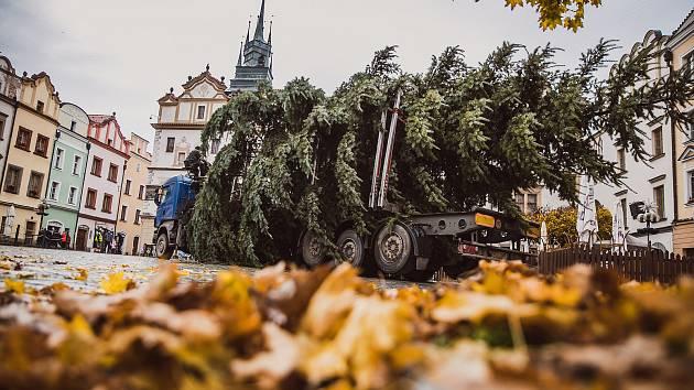 Pardubické náměstí už také zdobí vánoční strom