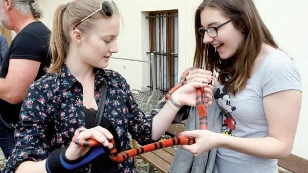 PŘÍRODOVĚDECKÉ ODDĚLENÍ Východočeského muzea zapůjčilo studentům živé hady, které si zájemci mohli osahat.