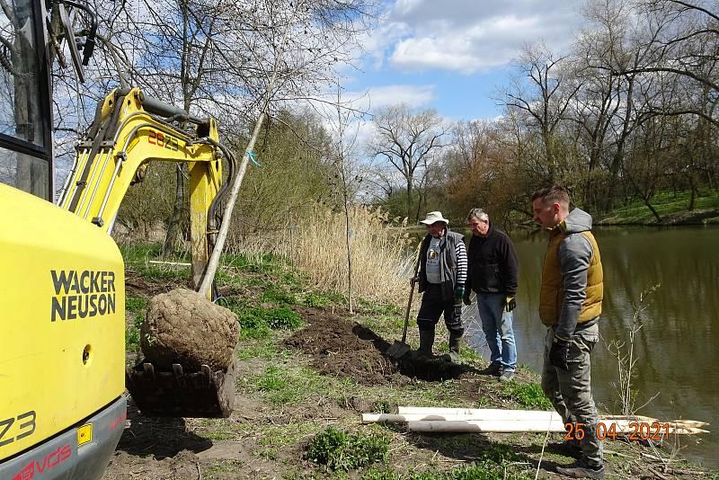 U rybníka Starý najatá firma a místní dobrovolníci vysázeli 16 stromů.