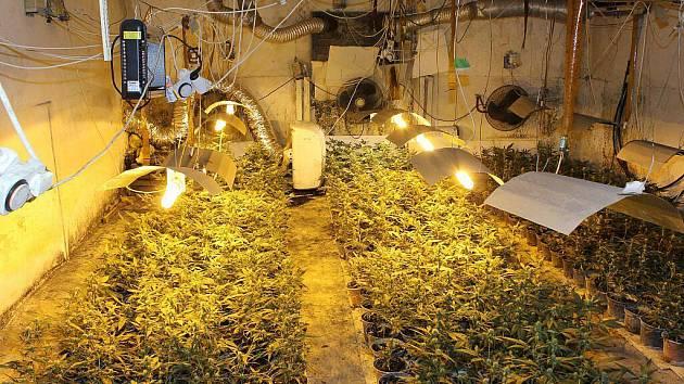 Ve třech velkopěstírnách zajistila policie kolem 5000 rostlin konopí