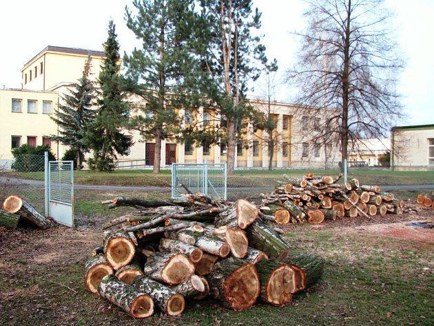 Alej topolů vlašských kolem holického kulturního domu padla. Důvodem pokácení byla bezpečnost lidí. Město však z větší části stromy nahradí keřovou zelení.