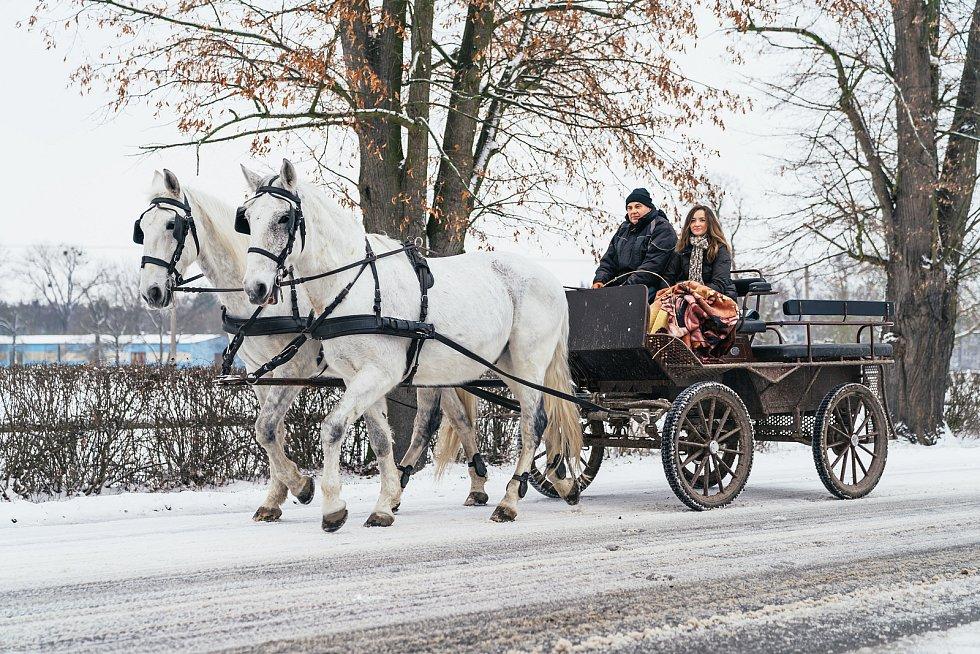 Kladruby nad Labem jsou známé především díky hřebčínu, na starokladrubské bělouše se jezdí dívat tisíce turistů ročně.