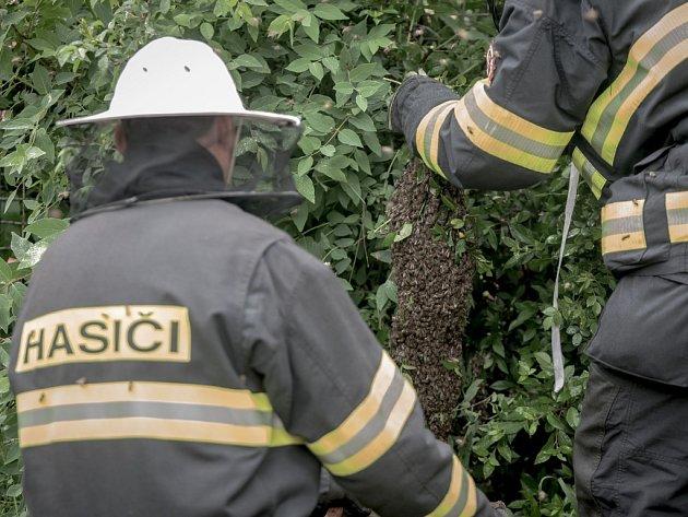 Přivolání hasičů na odstranění včelího roje je ve městech časté, ale také zhusta zbytečné. Včely v roji jsou ještě méně útočné, než obvykle a nejsou pro okolí nebezpečné.  Hasiči navíc musí tyto užitečné tvory po odstranění usmrtit.