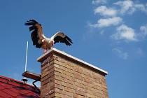 Čáp se zaseknul za jedním z komínů, s pomocí strážníků se ale dostal zpět na své hnízdo