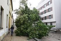 Pád stromu v rekonstruované ulici V Ráji právem vzbuzuje dotazy ke způsobu rekonstrukce ulice. Stromy kvůli obrubníkům přišly o část kořenů.