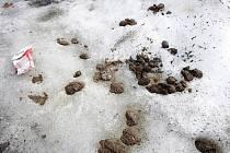 Nevábný pohled?  Bohužel taková je realita. Zejména na psí výkaly narazíte na ulici po zimě doslova na každém kroku.