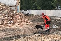 V sutinách trénují záchranářští psi