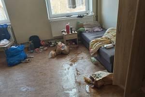 """""""Už na prahu pokoje se dalo konstatovat, že i v rozvojových oblastech jsou chlévy, kde to vypadá a voní lépe,"""" řekl mluvčí strážníků k pokoji na ubytovně, odkud museli vystěhovat nezvaného nájemníka."""