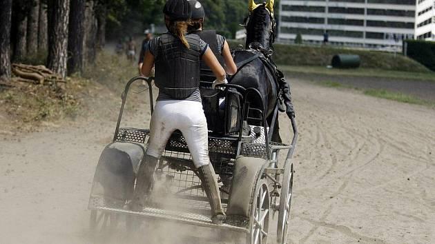 Soutěž koňských spřežení v Pardubicích