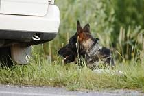 Místo prohledával i služební pes