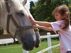 Kladrubští koně