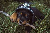 Pardubičtí strážníci mají nového chlupáče. Seznamte se s Rolfem.