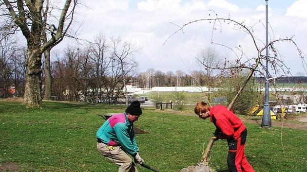 Zahradnické práce v přeloučském parku