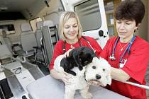 V Pardubickém kraji funguje už také veterinární záchranná služba. Domácí mazlíčky ošetří vlastní sanitka, která vpodstatě plní funkci pojízdné veterinární ošetřovny.