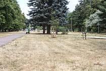 Vysušené původně zelené travní plochy v Pardubicích.