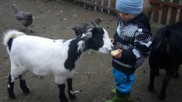 Děti mohly zvířata nakrmit
