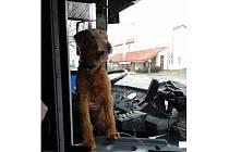 Pes se uvelebil u řidičky. Asi už ho procházka nebavila.