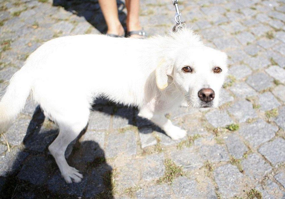 Fenka, kříženec asi tři až čtyři roky stará, přišla do útulku 2. srpna. Je mazlivá, ale zároveň hodně bojácná.