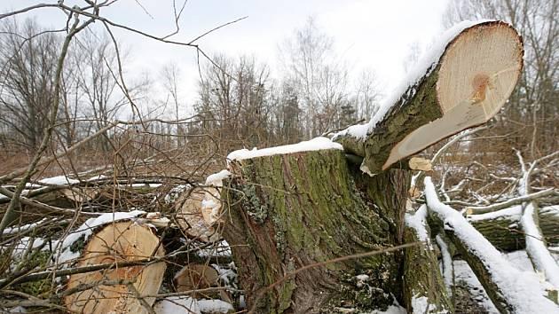 V pardubickém parku Na Špici se začalo kácet