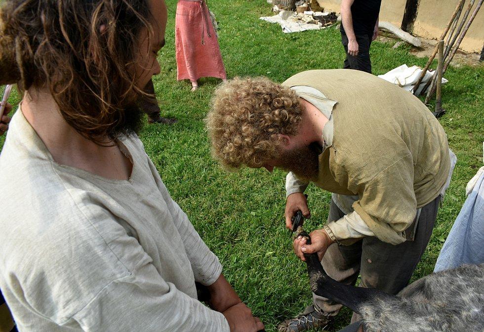 V Keltském skanzenu v Nasavrkách se v sobotu stříhaly ovce pérovým nůžkami.