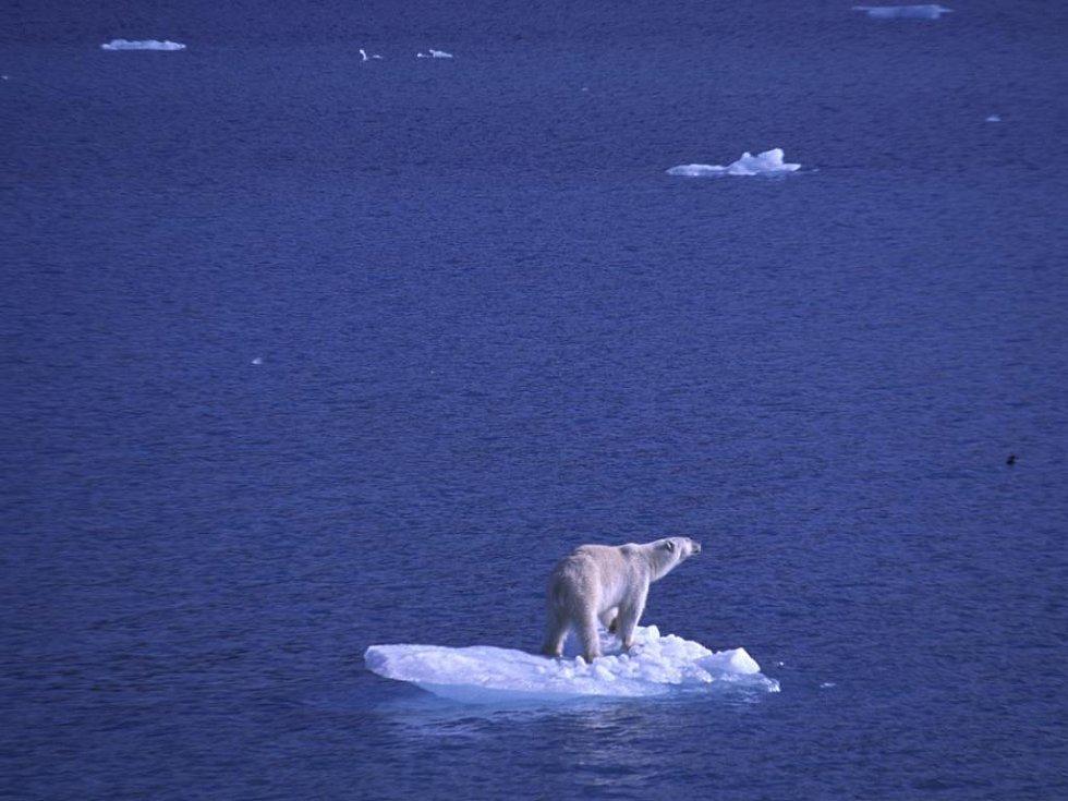 Král arktických plání - lední medvěd