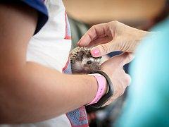 5. celostátní výstava exotických ježků v Pardubicích.