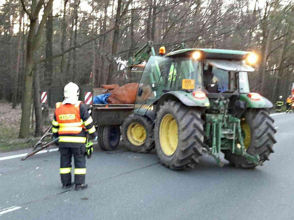 Střet s nákladním automobilem u Býště kůň nepřežil.