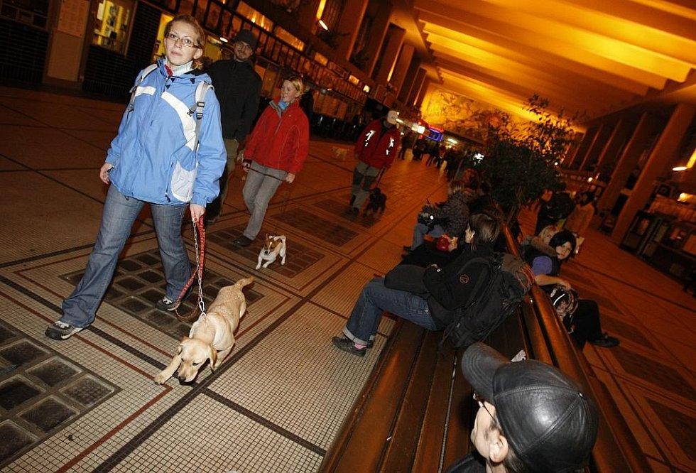 Správně vychovaný pes v nádražní hale nesmí obtěžovat ostatní cestující