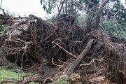 Vítr srazil strom na náměstí Legií v Pardubicích.