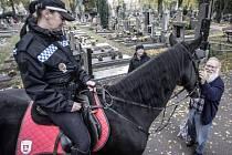 Pardubické hřbitovy i letos ohlídají také strážníci jízdního oddílu pardubické městské policie.