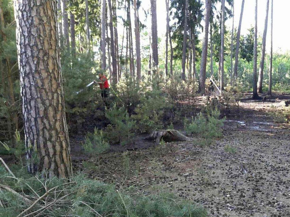 Zatím poslední požár lesa u Litošic. Vyčíslená škoda je půl milionu korun.