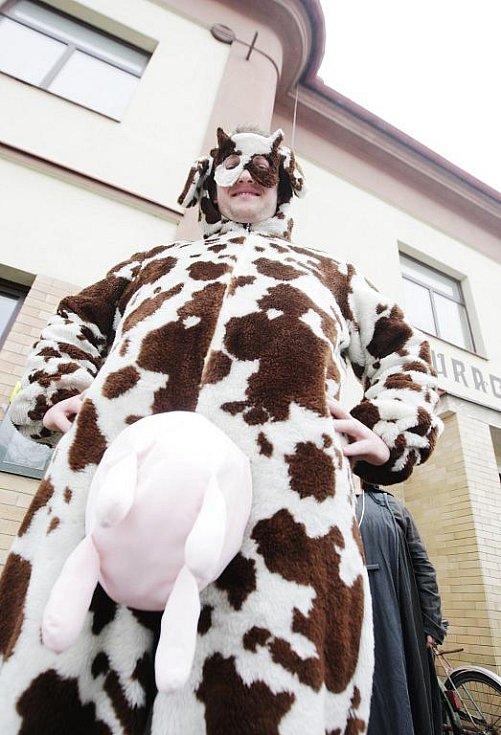 No ty krávo...